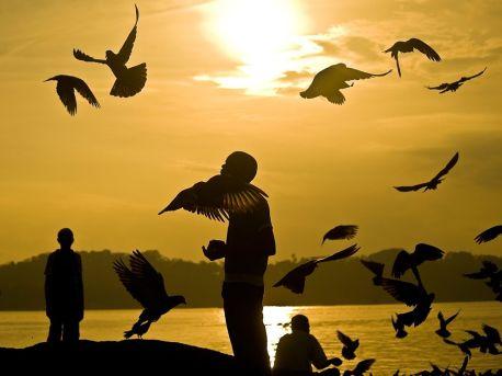 pigeons-port-blair_63468_990x742